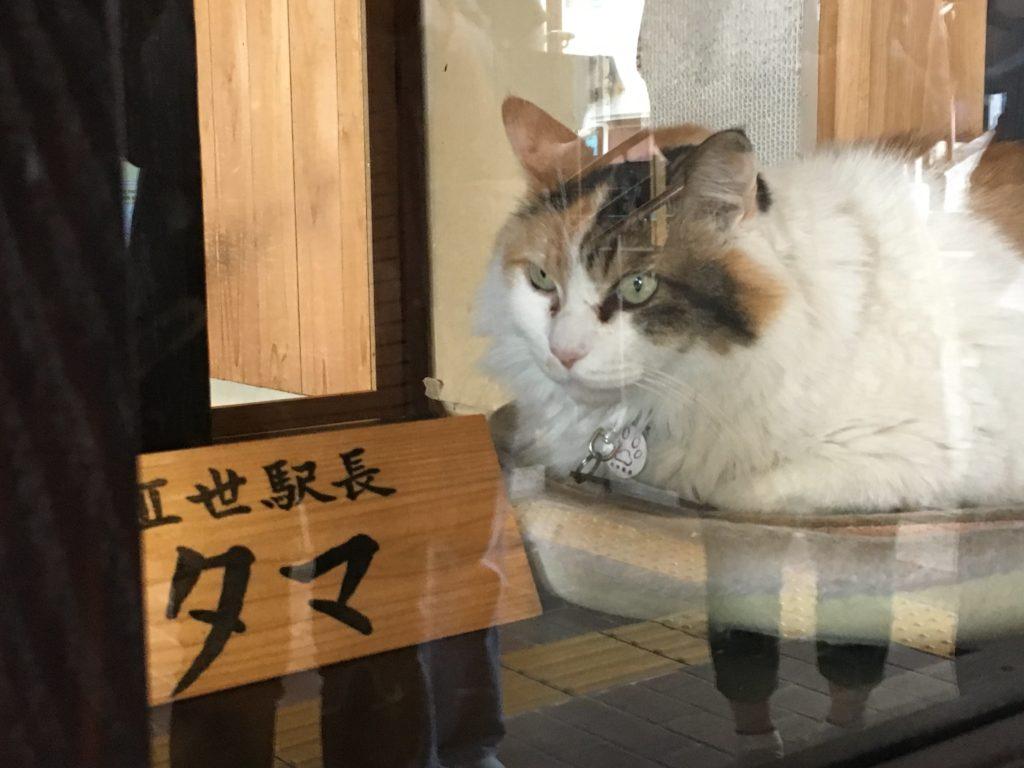貴志駅 たま駅長 ニタマちゃん