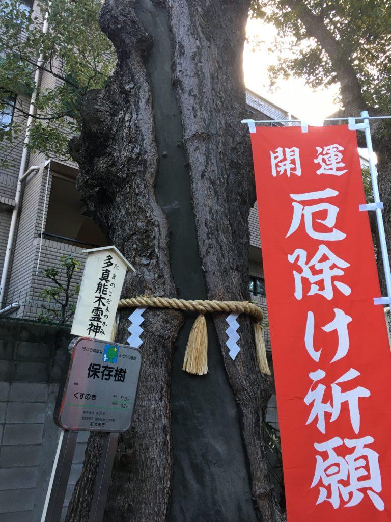 阿倍王子神社のご神木