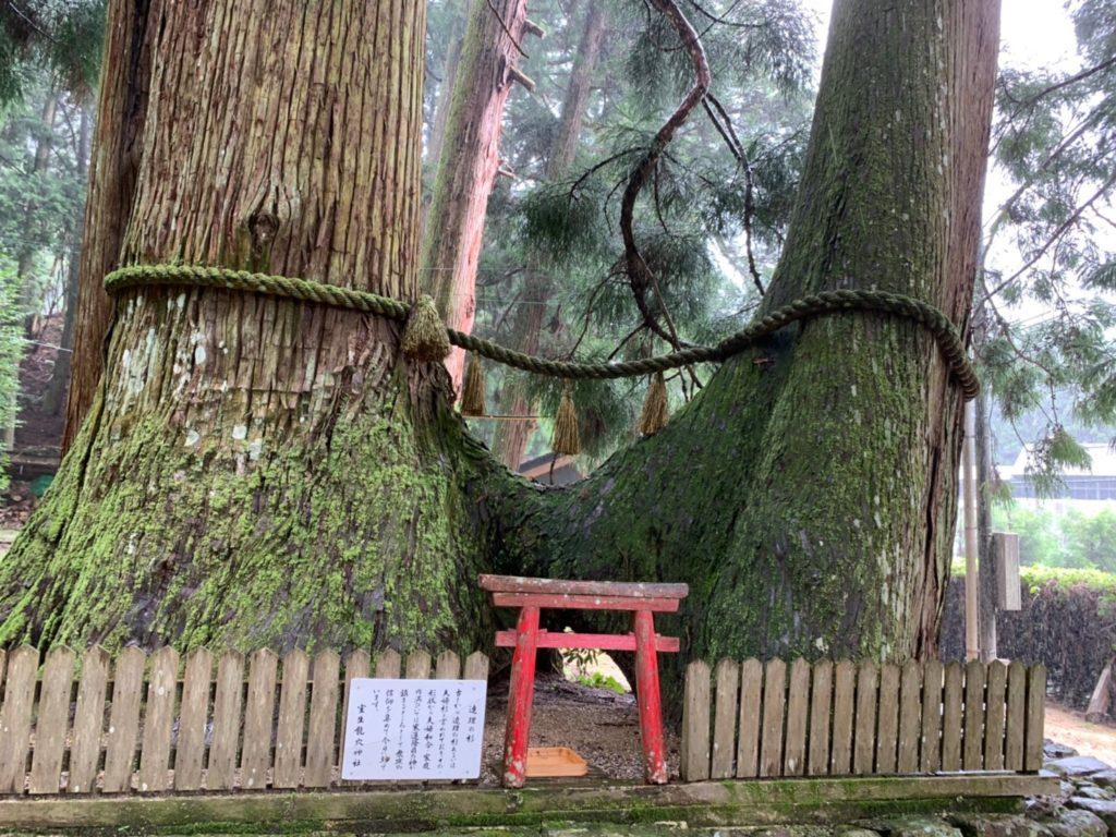 室生龍穴神社 連理の杉