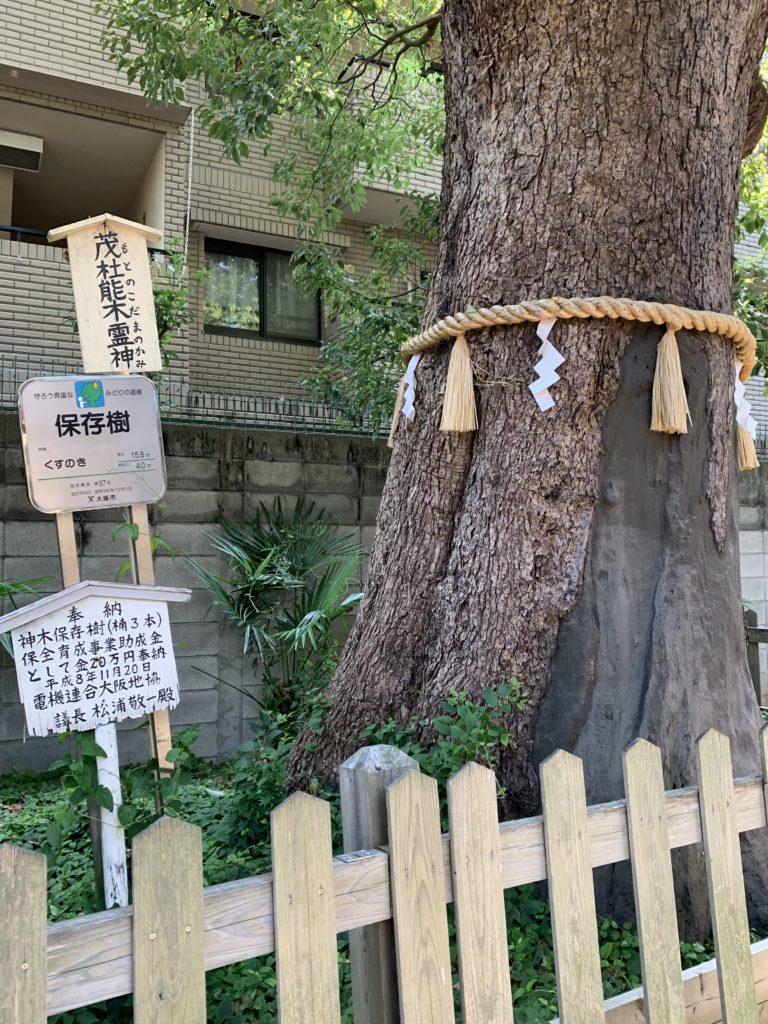 阿倍王子神社の楠